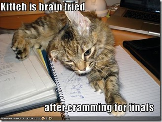 funny-pictures-cat-studied-for-finals